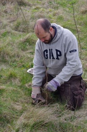 Sefton demonstrating immaculate tree planting technique
