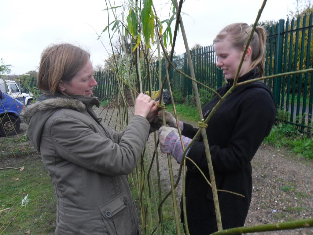 Willow weaving for our fedge