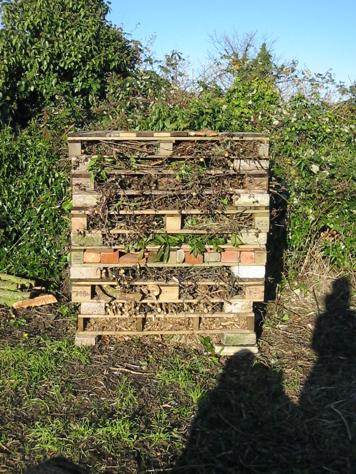 Our 5* bug hotel