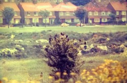 Dane Valley Woods on 2 June 1973